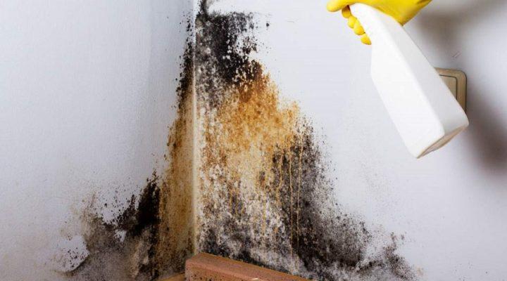 Stor besparelse på professionel håndtering af skimmelsvamp online